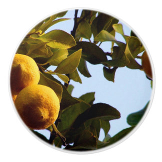 Cyprus Lemon Grove Ceramic Knob
