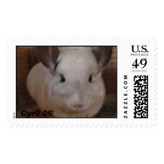 Cyril The Chinchilla Stamp