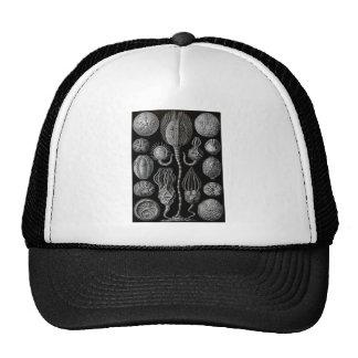 Cystoids Trucker Hat