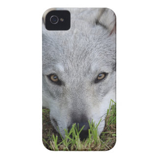 Czechoslovakian Wolfdog Case-Mate iPhone 4 Case