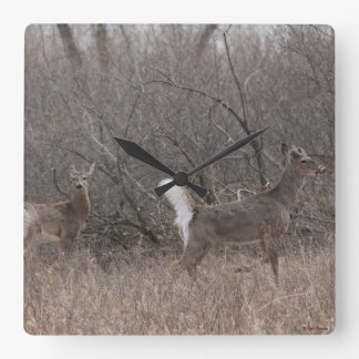 D0001 White-tailed Deer Square Wall Clock
