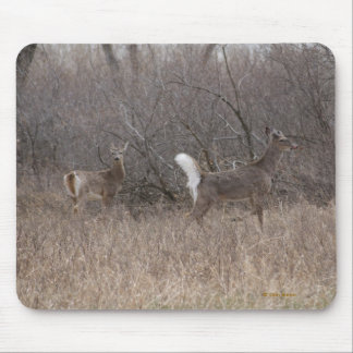 D0002 White-tail Deer Spring Bucks Mouse Pad
