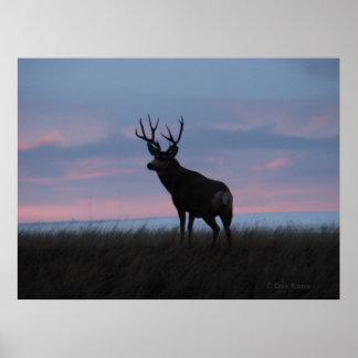 D0003 Mule Deer Poster
