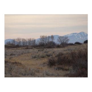 D0004 Mule Deer Sweetgrass Hills Postcard
