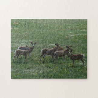 D0007 Mule Deer Puzzle