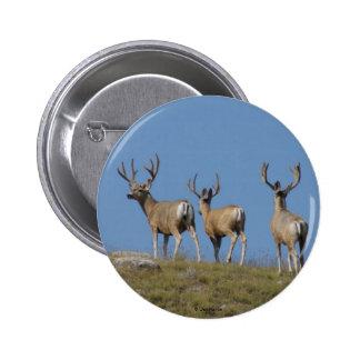 D0009 Mule Deer Bucks in Velvet button