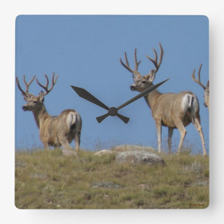 D0009 Mule Deer Bucks Square Wall Clock