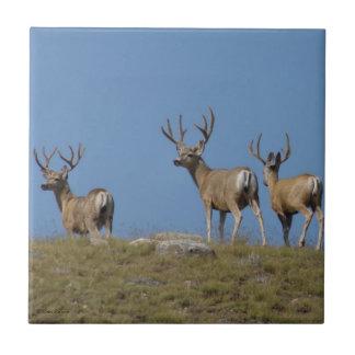 D0009 Mule Deer Bucks Tile