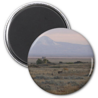 D0010 White-tailed Deer Sweet Grass Hills magnet