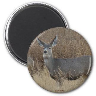 D0014 Mule Deer Doe magnet