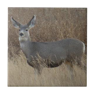 D0014 Mule Deer Doe Small Square Tile