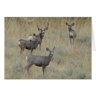 D0018 Mule Deer Card