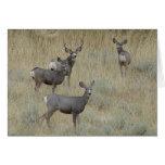 D0018 Mule Deer Cards