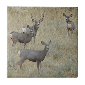 D0018 Mule Deer Small Square Tile