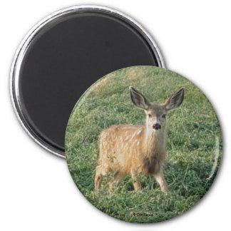 D0019 Mule Deer Fawn magnet