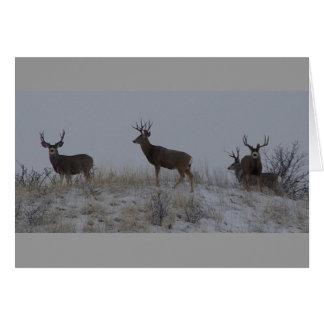 D0021 Mule Deer Bucks Card