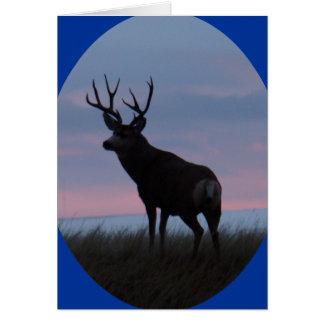 D0022 Mule Deer Buck Sunrise Buck Greeting Card