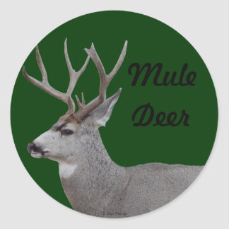 D0026 Mule Deer Buck Head and Shoulders Classic Round Sticker