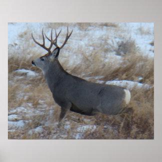 D0028 Mule Deer Buck Running Poster