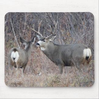 D0029 Mule Deer Mouse Pad