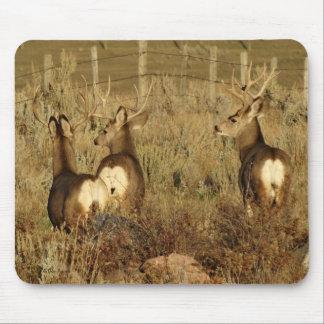 D0030 Mule Deer Bucks Mouse Pad