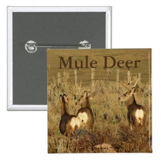 D0030 Mule Deer Bucks Pinback Button