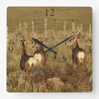 D0030 Mule Deer Bucks Square Wall Clock