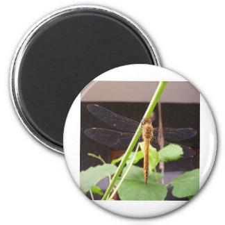 d18 2 inch round magnet