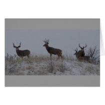 D21 Mule Deer Bucks Card