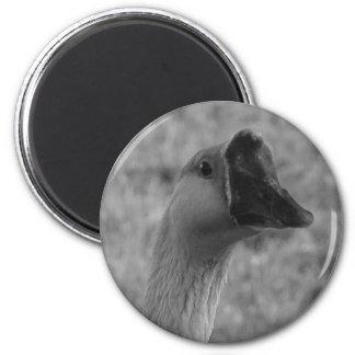 da goose refrigerator magnets