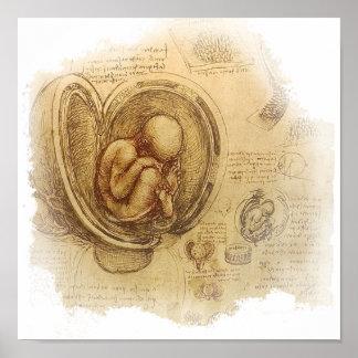 da Vinci - bosquejo del embrión Impresiones