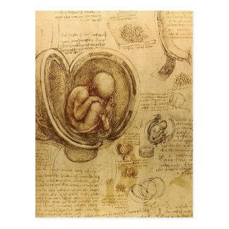 da Vinci - bosquejo del embrión Postales