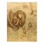 da Vinci - Embryo Sketch Postcard