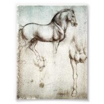 Da Vinci Horse Photo Print