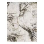 Da Vinci, Leonardo - estudio de la anatomía Postal