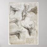 Da Vinci, Leonardo - estudio de la anatomía Poster