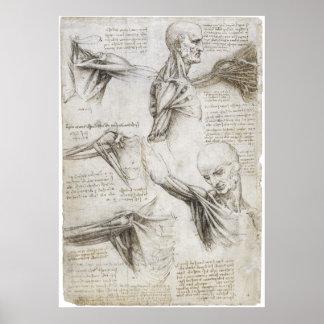 Da Vinci, Leonardo - estudio de la anatomía Póster