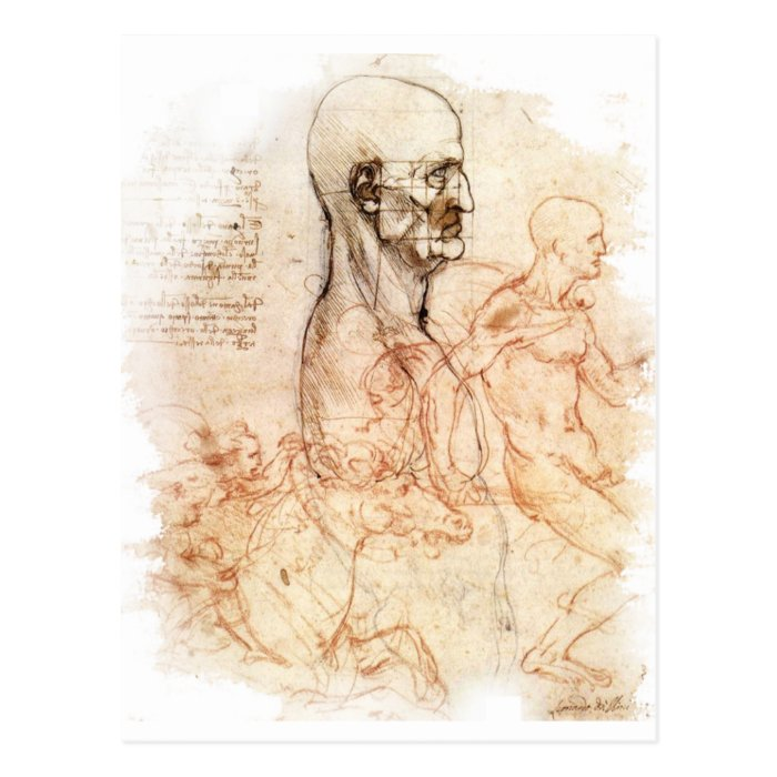 da Vinci -- Man and Horse Sketch Postcard