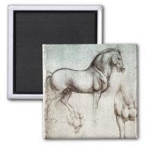 Da Vinci Study of a Horse Pencil Drawing Sketch Magnet
