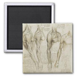 Da Vinci's Human Arm Anatomy 2 Inch Square Magnet
