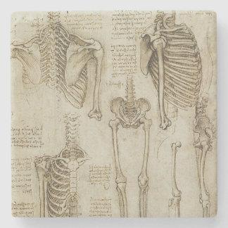 Da Vinci's Human Skeleton Anatomy Sketches Stone Coaster