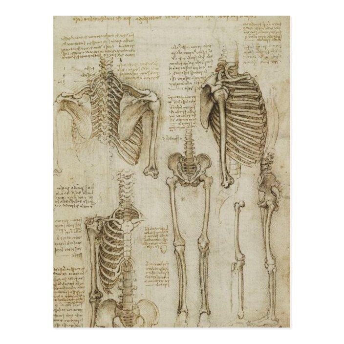 Da Vinci S Human Skeleton Anatomy Sketches Postcard Zazzle Com