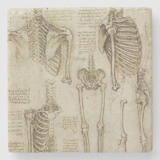 Da Vinci's Human Skeleton Anatomy Sketches Stone Coaster