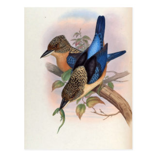 Dacelo Tyro (Spangled Kookaburra) Postcard