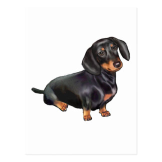 Dachshund (A) - Black and Tan Postcard