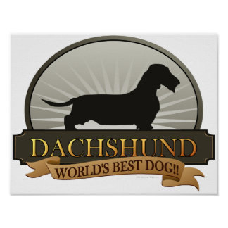Dachshund [Alambre-haired] Poster