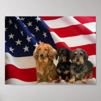 Dachshund America Poster