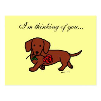 Dachshund and a flower cartoon postcard