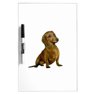 Dachshund (B) - brown-red Dry Erase Boards