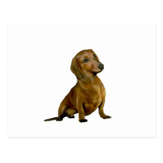 Dachshund (B) - brown-red Postcard